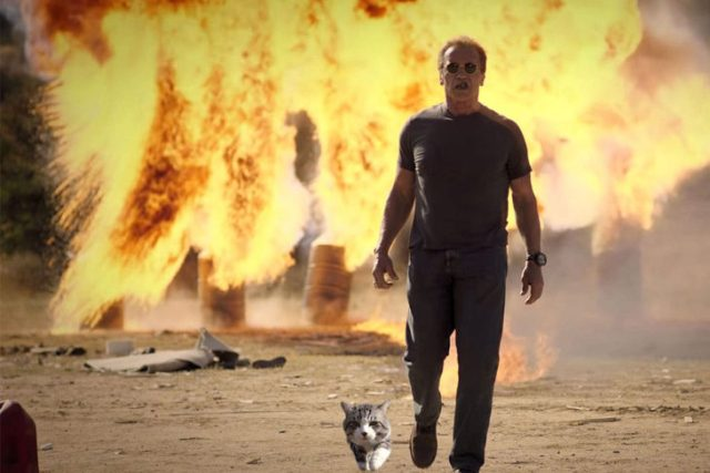 gato editaado en escena de terminator