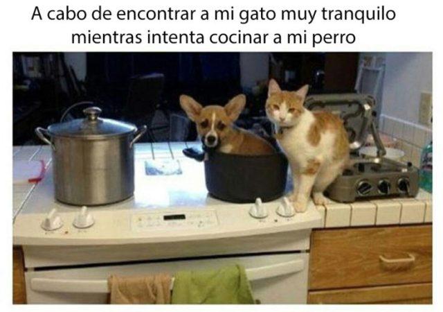 gato malvado