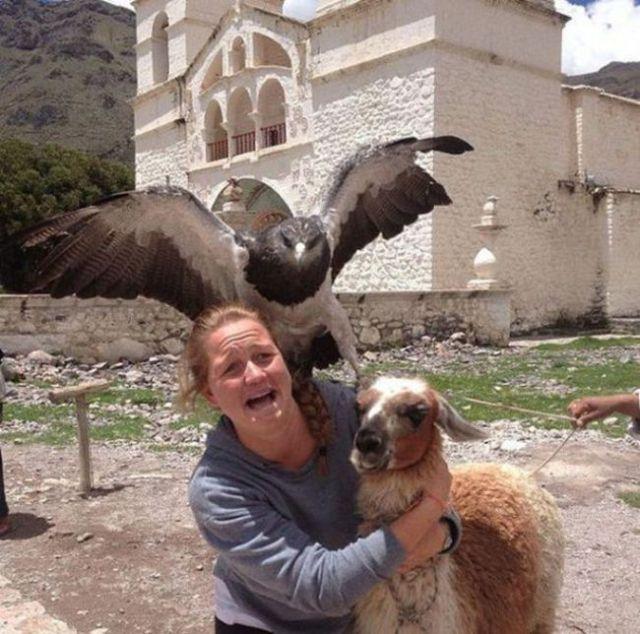águila se sube a la espalda de mujer