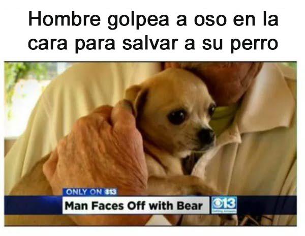 golpea a oso para rescatar a su perro