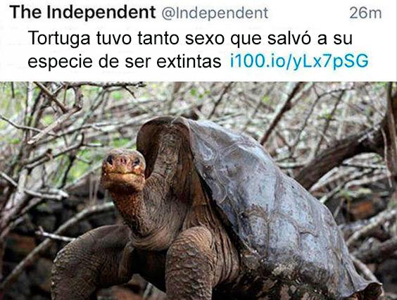 Tortuga salva a su especie de la extinción