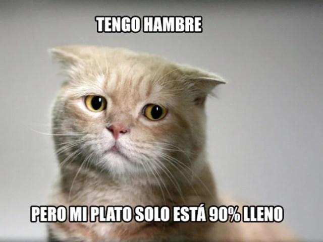 gato hambre