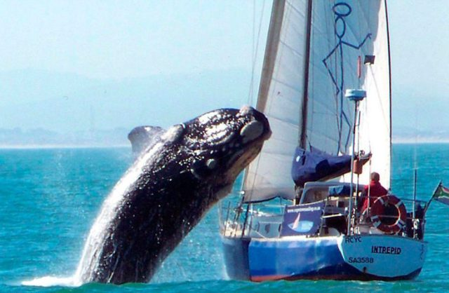 ballena fuese del agua a unos segundos de caer sobre barco