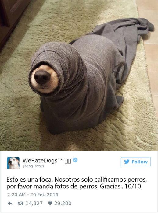 soy una foca