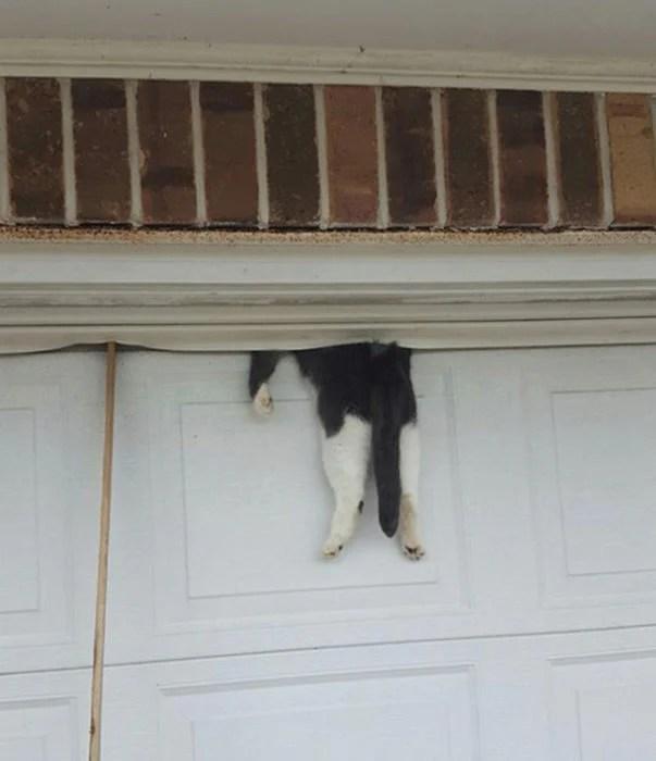 gato atorado en la puerta del garage