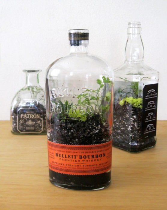botellas vacías utilizadas para colocar ciertas plantas