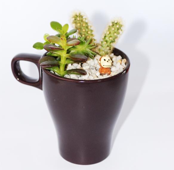taza usada para decorar con plantas y hacer un terrario