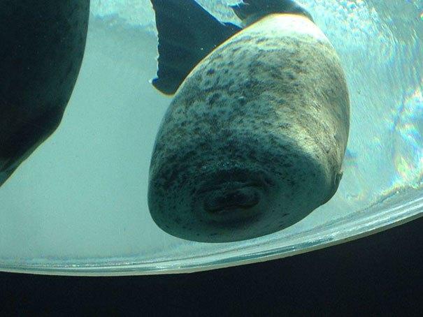 foca se estrella en vidrio