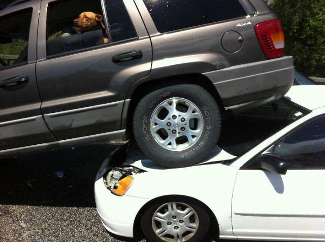 Perro asomado en carro accidentado