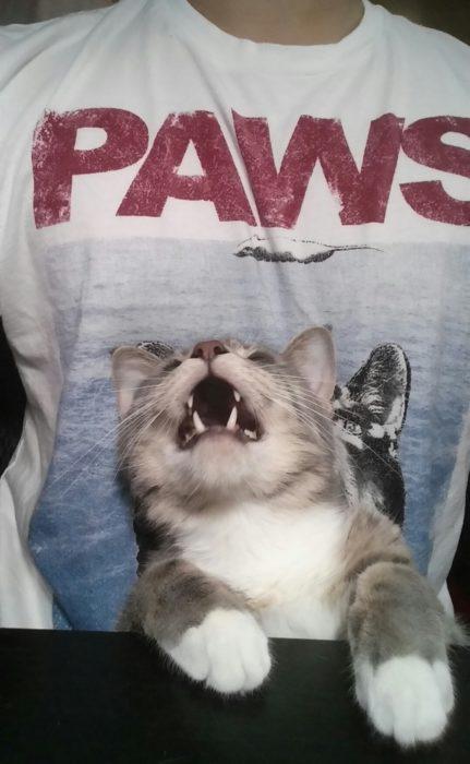 Paws gatito