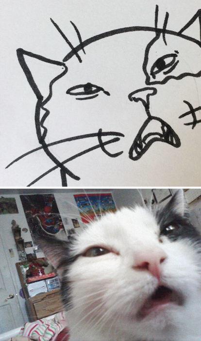 Dibujos realistas gatito - hacia de extrañado