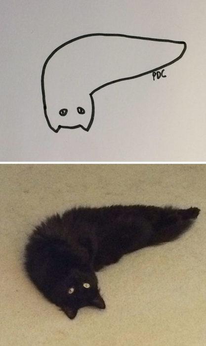 Dibujos realistas gatito - en la alfombra