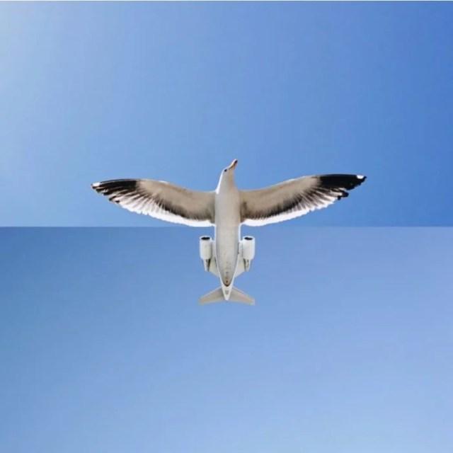 Fotomontajes - gaviota ó avión