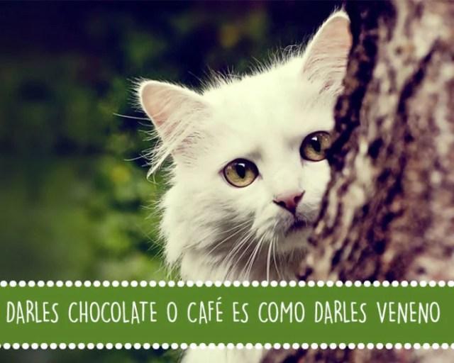 gato árbol veneno