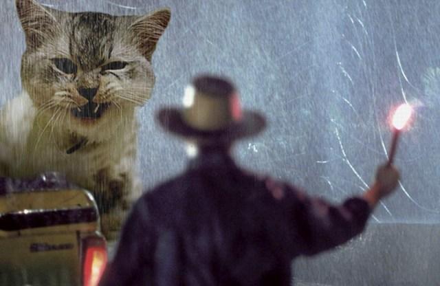 gato gigante enojado