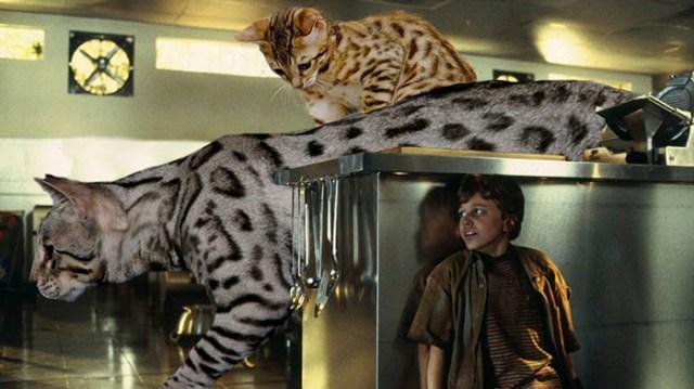 gatos buscando a humano