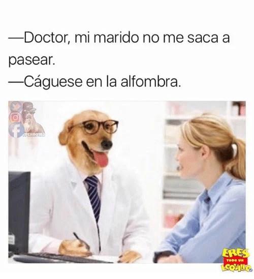 alfombra memes Dr. perro