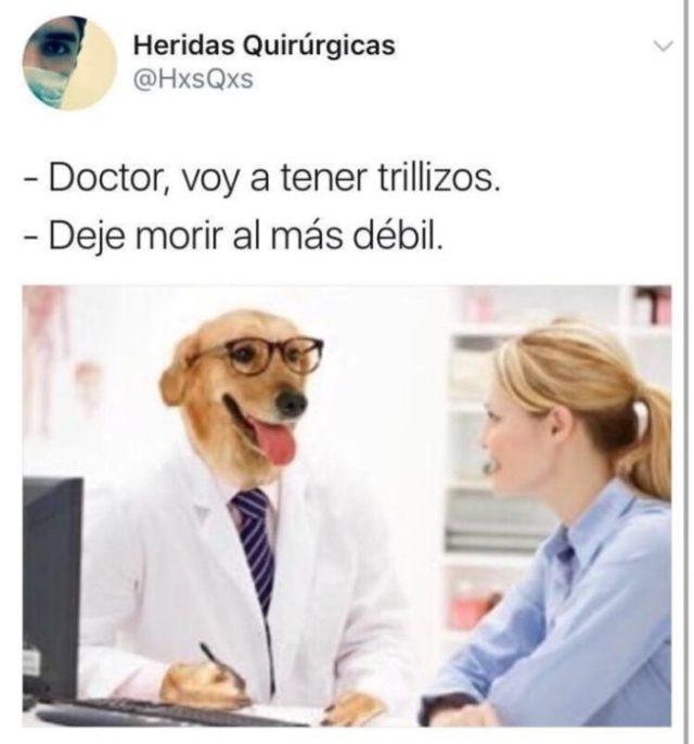 deja fallecer al más décil memes Dr. perro
