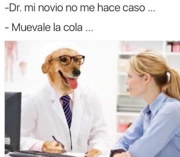 cola desplazar novio memes Dr. perro