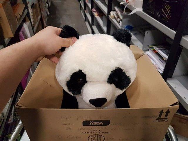 Persona deteniendo un oso panda de peluche en una caja