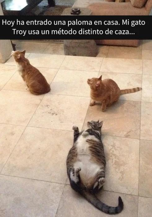 Tres gatitos viendo algo