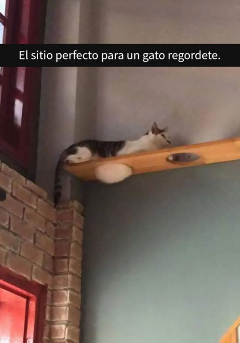 Gato gordito acostado