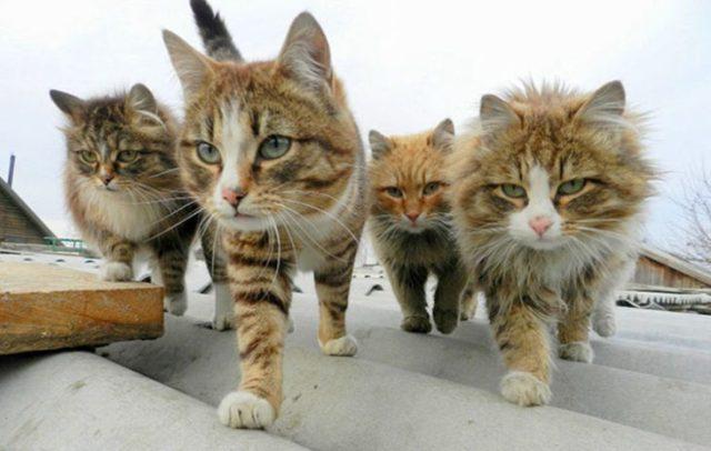 un conjunto de gatitos caminando sobre el tejado