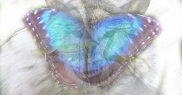 Mariposa ilustración test