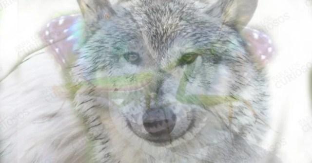Lobo test