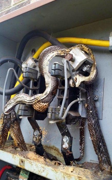 serpiente electrocutada dentro del centro de carga