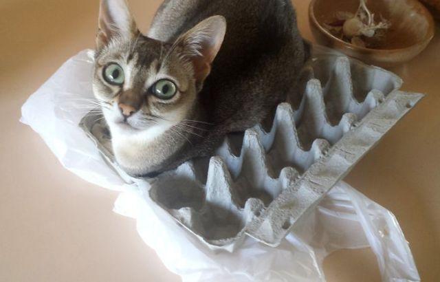 gatos en cartones
