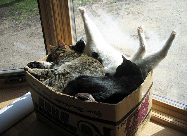 gatos dormidos estirandose