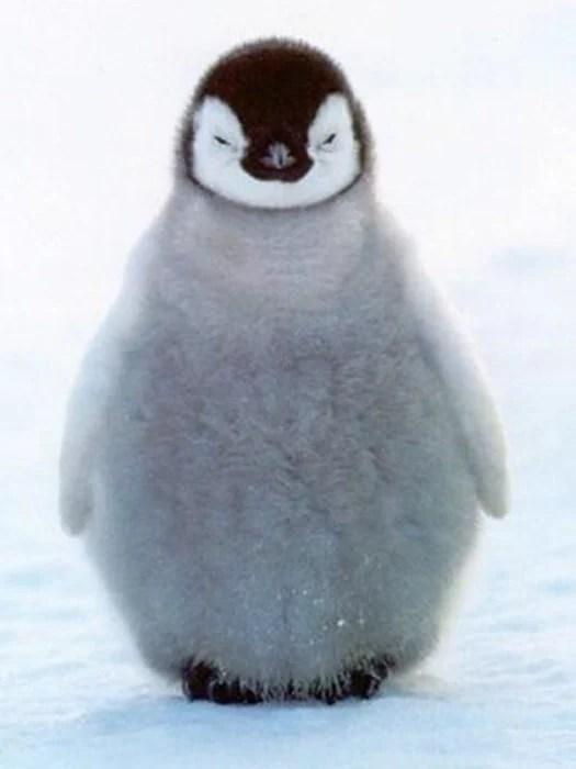 pinguino bebé esponjoso molesto