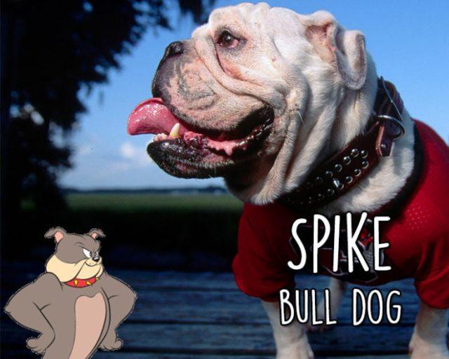 spike bull dog