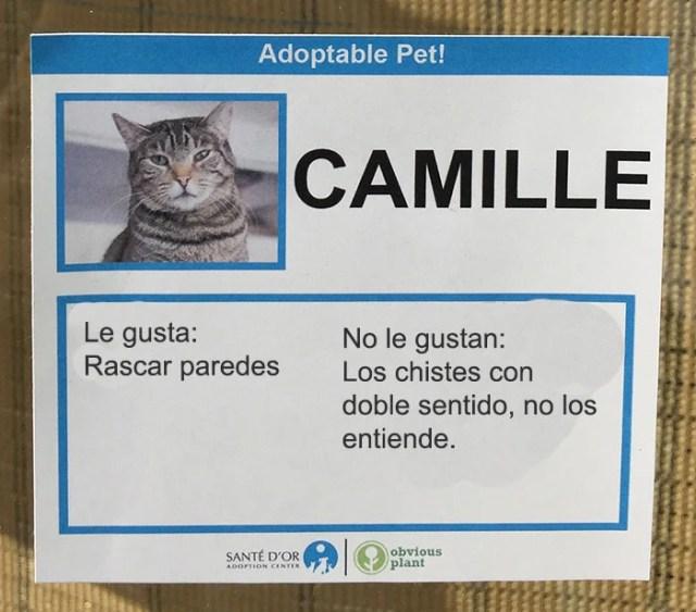 camille descripción gato en adopción