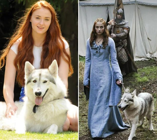 Sansa adopto a su lobo