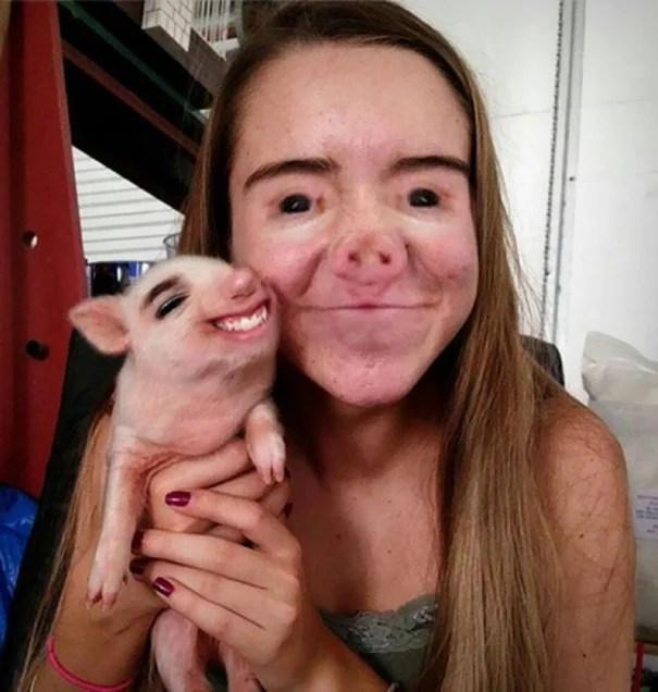 Face swap cerdo