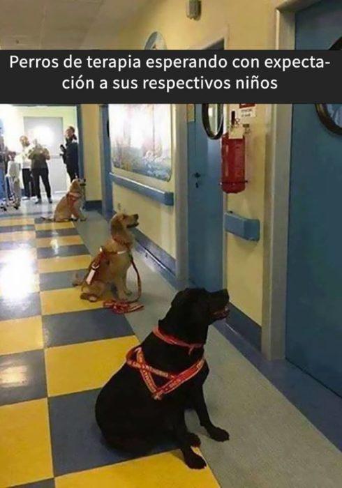 Snaps perritos - aguardando a sus propietarios de cirugía