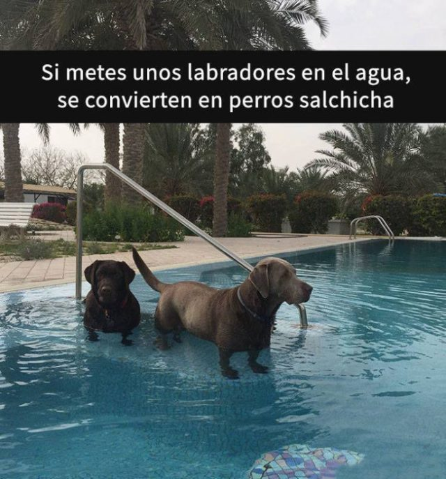 Snaps perritos - agricultores en agua son salchichas