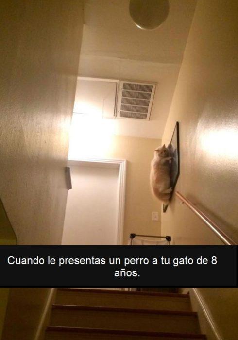 gato colgado en un cuadro