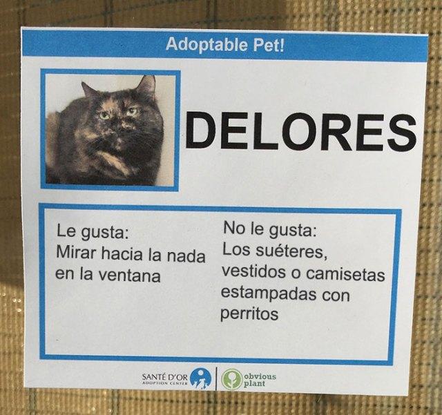 delores descripción gato en adopción