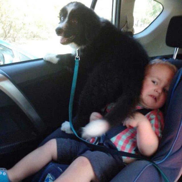 niño hacia aplastada perro