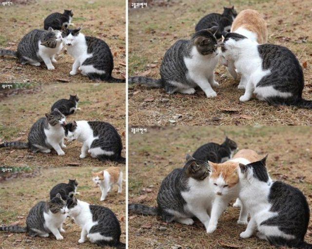 gato pasando entre 2 gatos