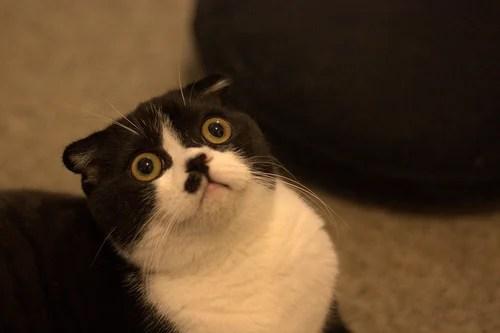 gato ojos dramáticos