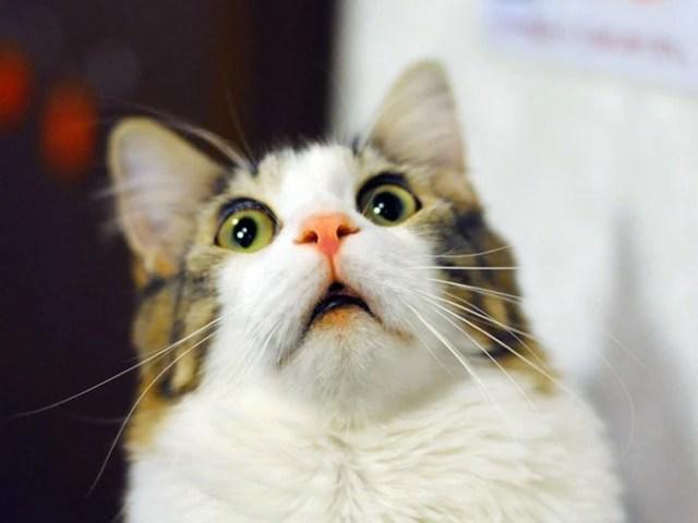 gato sorpresa