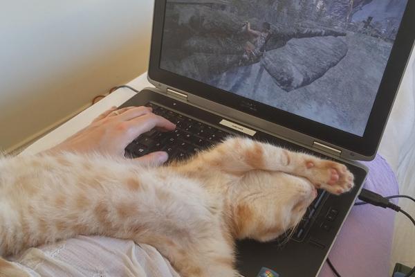 gato sobre ordenador