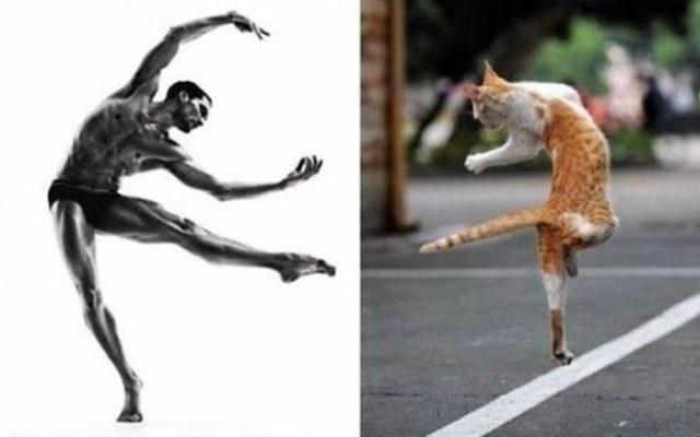 GatosvsHombre bailando