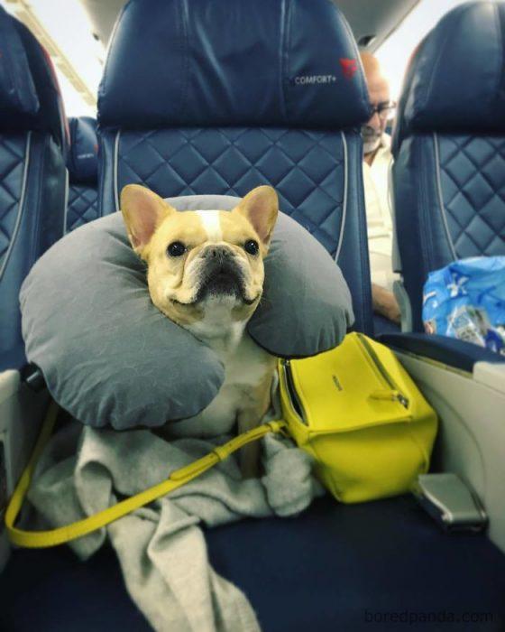 perrito cómodo