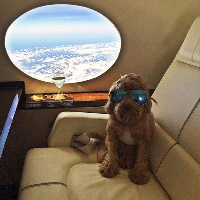 perro jet privado