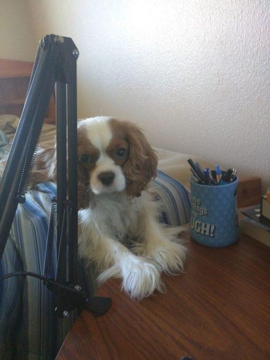 perro con las patas en el escritorio
